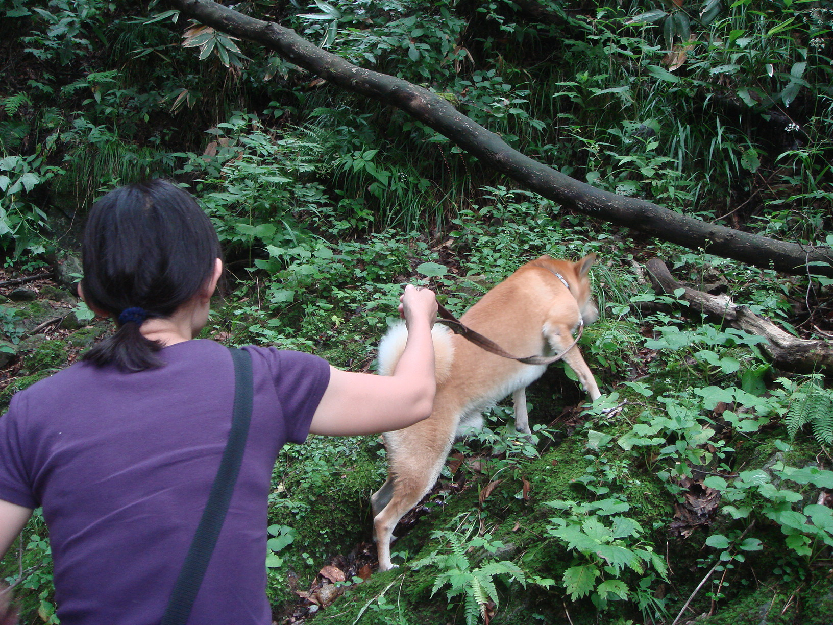 Dsc06770 特に岩手マタギ犬のがんちゃんは、山になじんでましたあ~。マタギ犬の血が騒...
